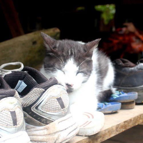 Gato con Zapatos