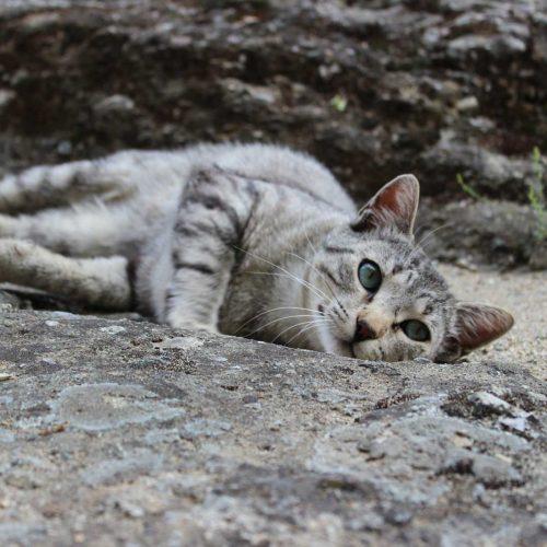 Monastery Cat